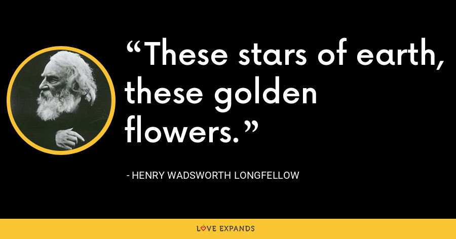 These stars of earth, these golden flowers. - Henry Wadsworth Longfellow