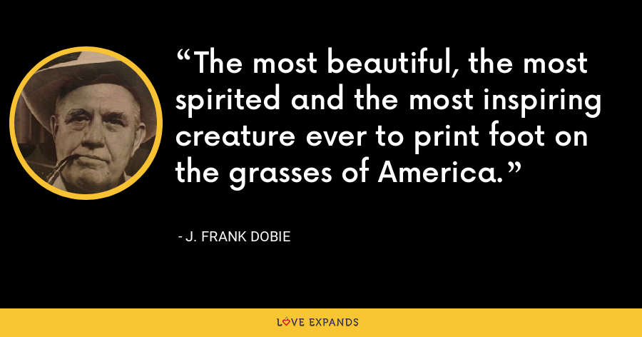 The most beautiful, the most spirited and the most inspiring creature ever to print foot on the grasses of America. - J. Frank Dobie