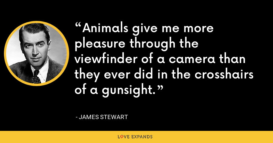 Animals give me more pleasure through the viewfinder of a camera than they ever did in the crosshairs of a gunsight. - James Stewart