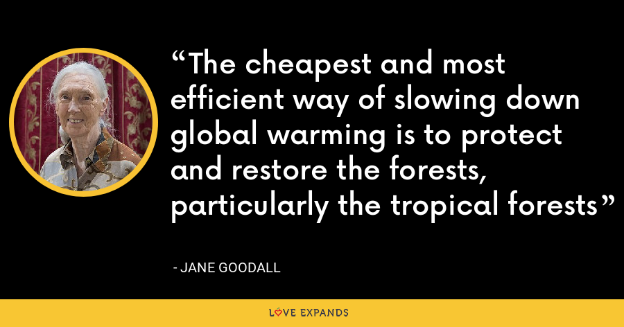 The cheapest and most efficient way of slowing down global warming is to protect and restore the forests, particularly the tropical forests - Jane Goodall