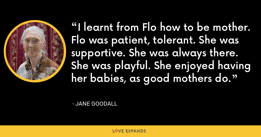 I learnt from Flo how to be mother. Flo was patient, tolerant. She was supportive. She was always there. She was playful. She enjoyed having her babies, as good mothers do. - Jane Goodall