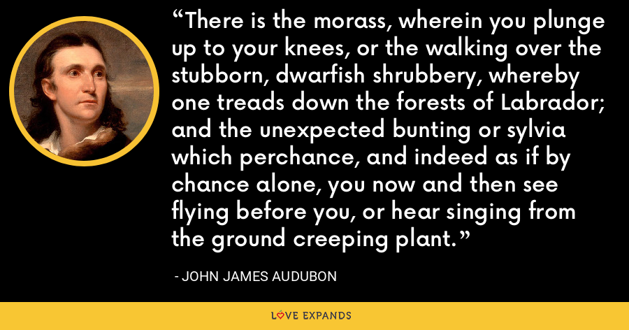 There is the morass, wherein you plunge up to your knees, or the walking over the stubborn, dwarfish shrubbery, whereby one treads down the forests of Labrador; and the unexpected bunting or sylvia which perchance, and indeed as if by chance alone, you now and then see flying before you, or hear singing from the ground creeping plant. - John James Audubon
