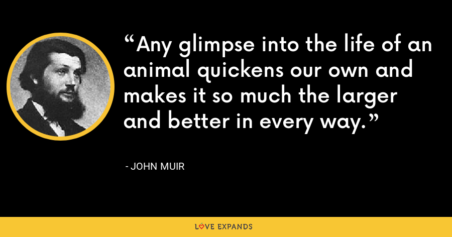 Any glimpse into the life of an animal quickens our own and makes it so much the larger and better in every way. - John Muir