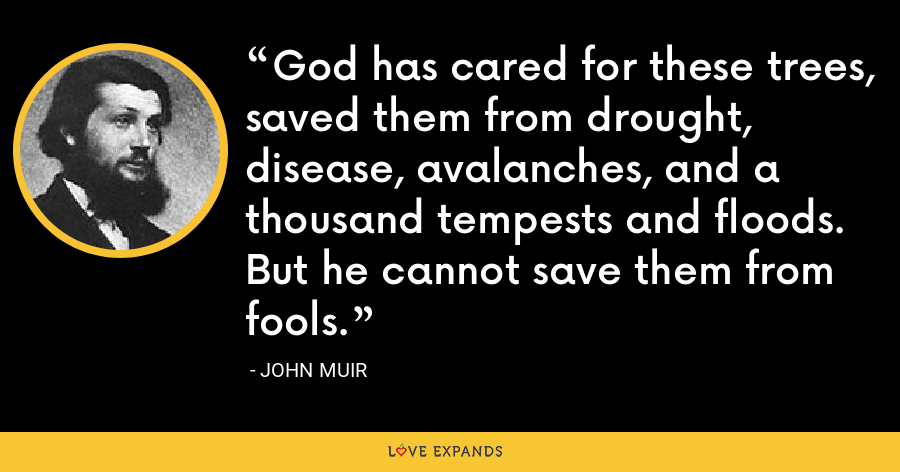 God has cared for these trees, saved them from drought, disease, avalanches, and a thousand tempests and floods. But he cannot save them from fools. - John Muir