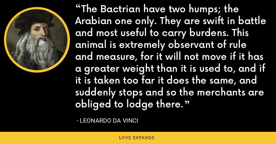 The Bactrian have two humps; the Arabian one only. They are swift in battle and most useful to carry burdens. This animal is extremely observant of rule and measure, for it will not move if it has a greater weight than it is used to, and if it is taken too far it does the same, and suddenly stops and so the merchants are obliged to lodge there. - Leonardo da Vinci