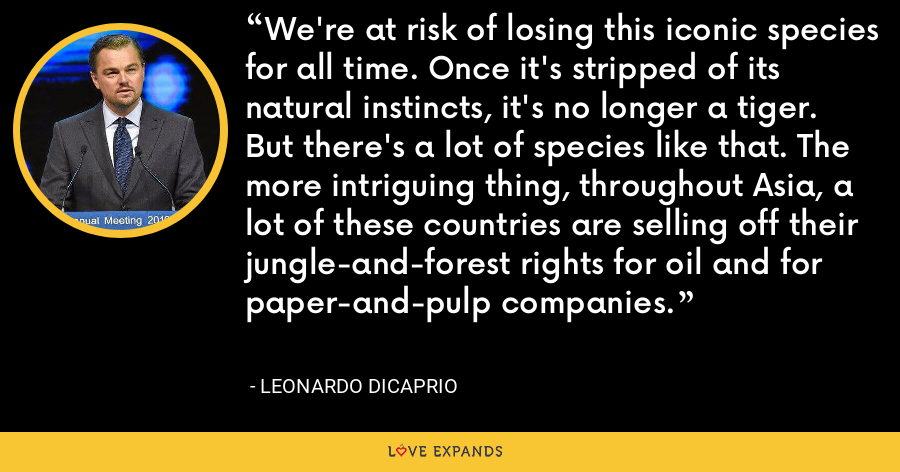 We're at risk of losing this iconic species for all time. Once it's stripped of its natural instincts, it's no longer a tiger. But there's a lot of species like that. The more intriguing thing, throughout Asia, a lot of these countries are selling off their jungle-and-forest rights for oil and for paper-and-pulp companies. - Leonardo DiCaprio