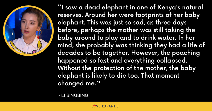 I saw a dead elephant in one of Kenya's natural reserves. Around her were footprints of her baby elephant. This was just so sad, as three days before, perhaps the mother was still taking the baby around to play and to drink water. In her mind, she probably was thinking they had a life of decades to be together. However, the poaching happened so fast and everything collapsed. Without the protection of the mother, the baby elephant is likely to die too. That moment changed me. - Li Bingbing