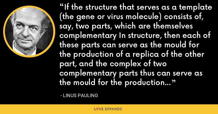 If the structure that serves as a template (the gene or virus molecule) consists of, say, two parts, which are themselves complementary In structure, then each of these parts can serve as the mould for the production of a replica of the other part, and the complex of two complementary parts thus can serve as the mould for the production of duplicates of itself. - Linus Pauling