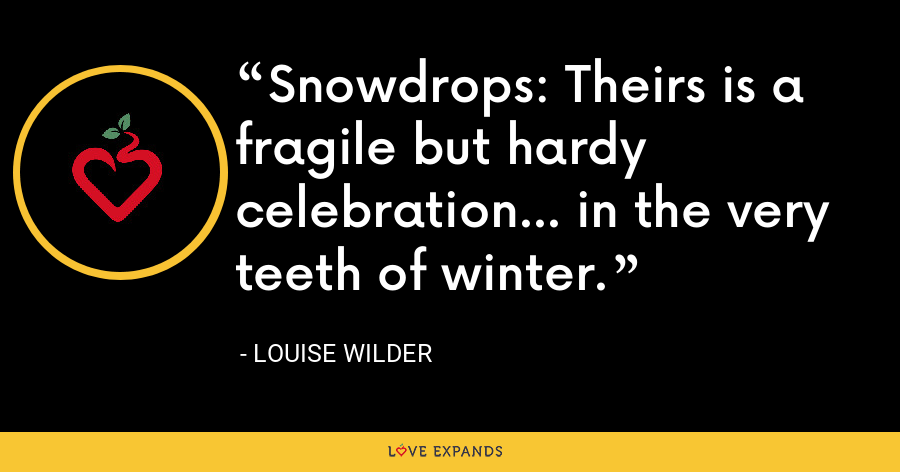 Snowdrops: Theirs is a fragile but hardy celebration... in the very teeth of winter. - Louise Wilder