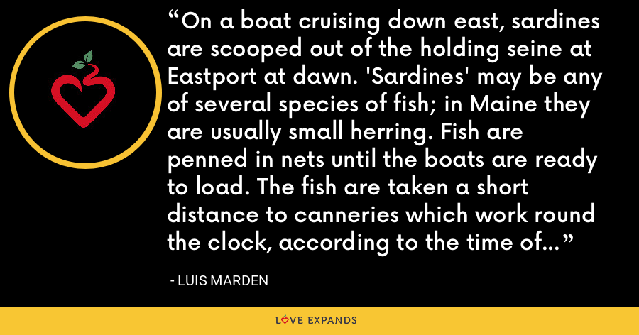 On a boat cruising down east, sardines are scooped out of the holding seine at Eastport at dawn. 'Sardines' may be any of several species of fish; in Maine they are usually small herring. Fish are penned in nets until the boats are ready to load. The fish are taken a short distance to canneries which work round the clock, according to the time of the catch. - Luis Marden