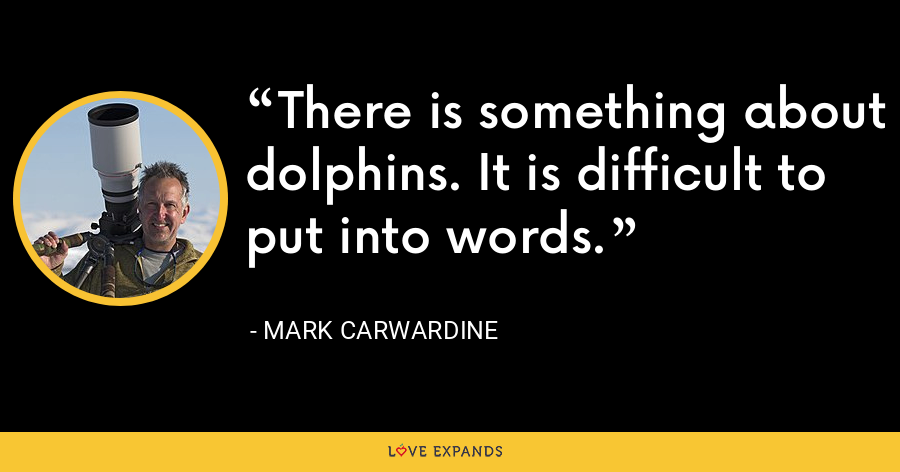 There is something about dolphins. It is difficult to put into words. - Mark Carwardine
