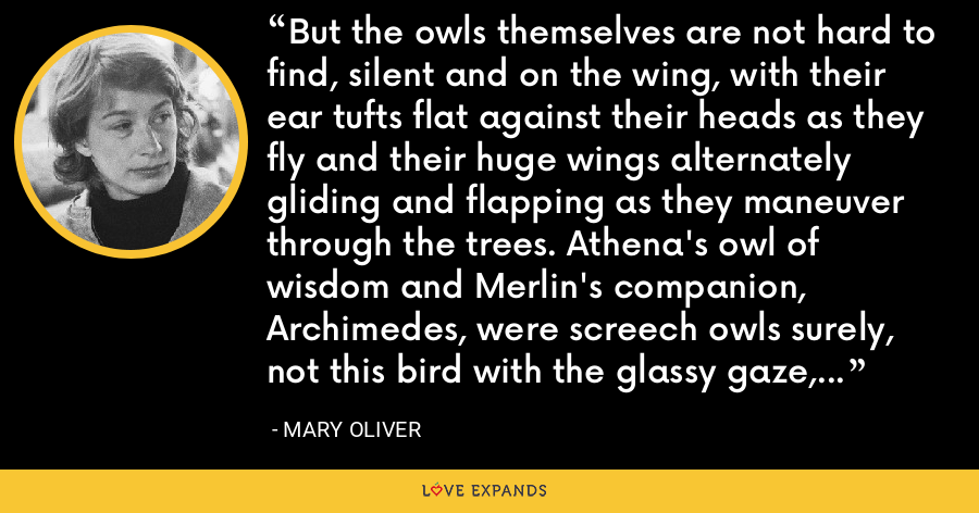 But the owls themselves are not hard to find, silent and on the wing, with their ear tufts flat against their heads as they fly and their huge wings alternately gliding and flapping as they maneuver through the trees. Athena's owl of wisdom and Merlin's companion, Archimedes, were screech owls surely, not this bird with the glassy gaze, restless on the bough, nothing but blood on its mind. - Mary Oliver