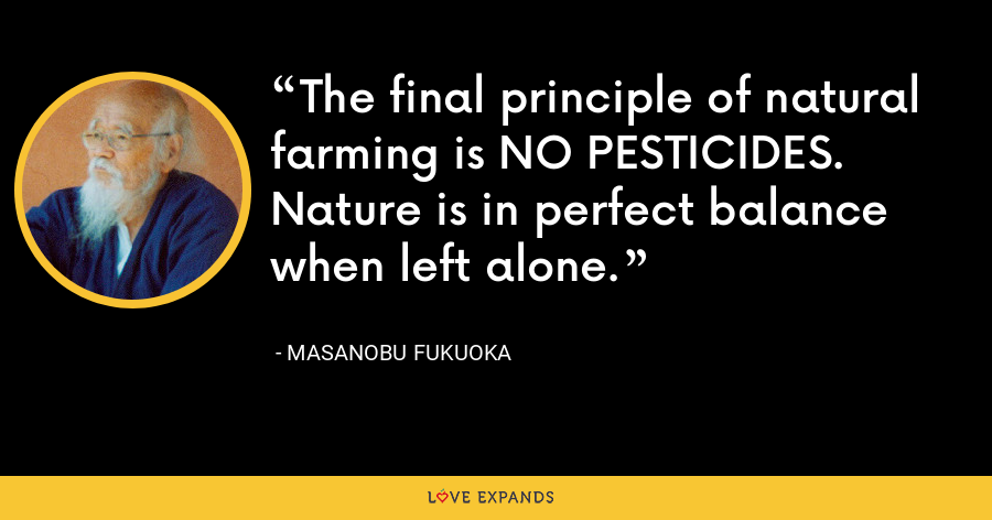 The final principle of natural farming is NO PESTICIDES. Nature is in perfect balance when left alone. - Masanobu Fukuoka