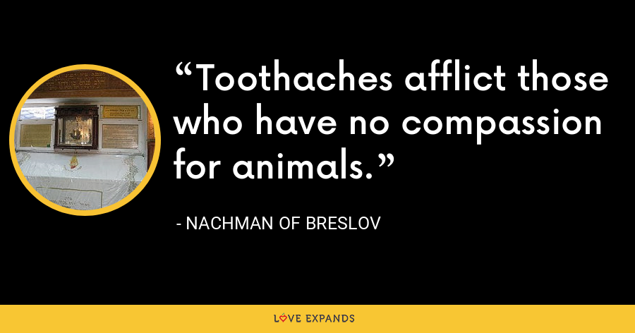 Toothaches afflict those who have no compassion for animals. - Nachman of Breslov