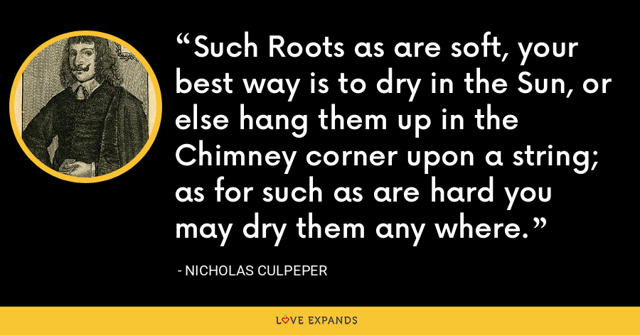 Such Roots as are soft, your best way is to dry in the Sun, or else hang them up in the Chimney corner upon a string; as for such as are hard you may dry them any where. - Nicholas Culpeper