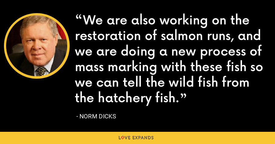 We are also working on the restoration of salmon runs, and we are doing a new process of mass marking with these fish so we can tell the wild fish from the hatchery fish. - Norm Dicks