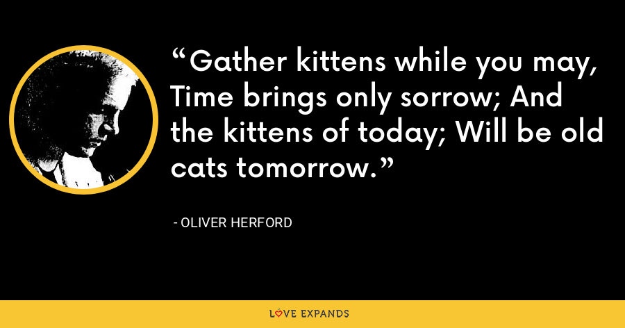 Gather kittens while you may, Time brings only sorrow; And the kittens of today; Will be old cats tomorrow. - Oliver Herford
