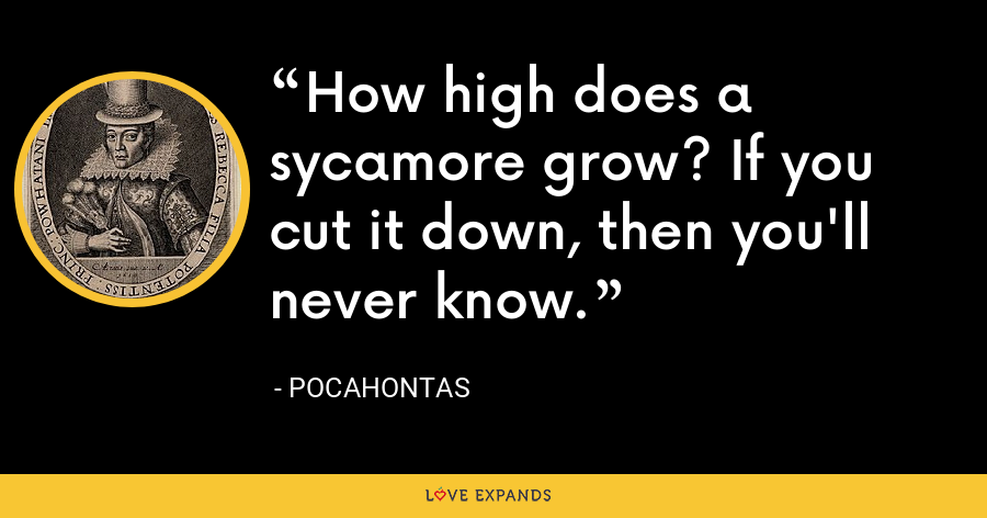 How high does a sycamore grow? If you cut it down, then you'll never know. - Pocahontas