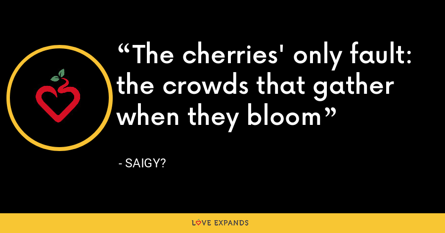 The cherries' only fault: the crowds that gather when they bloom - Saigy?
