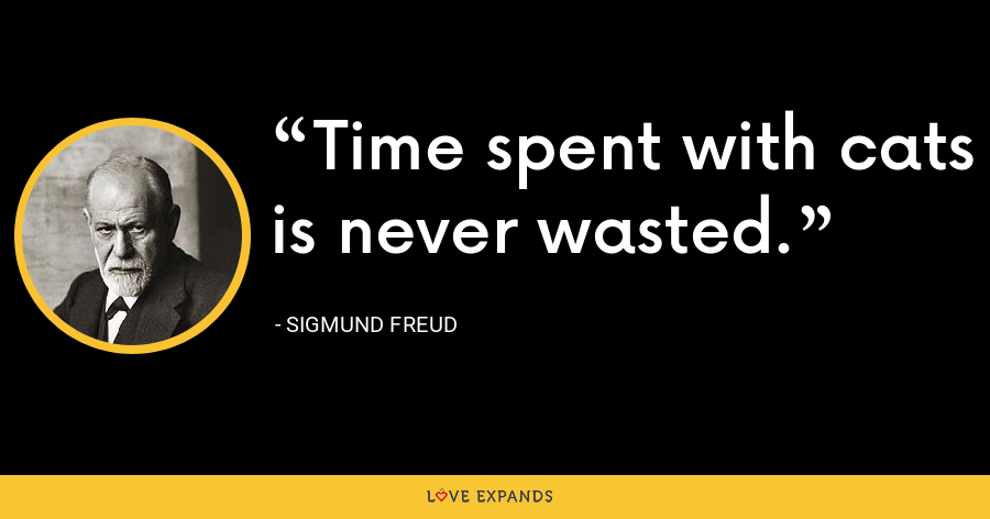 Time spent with cats is never wasted. - Sigmund Freud