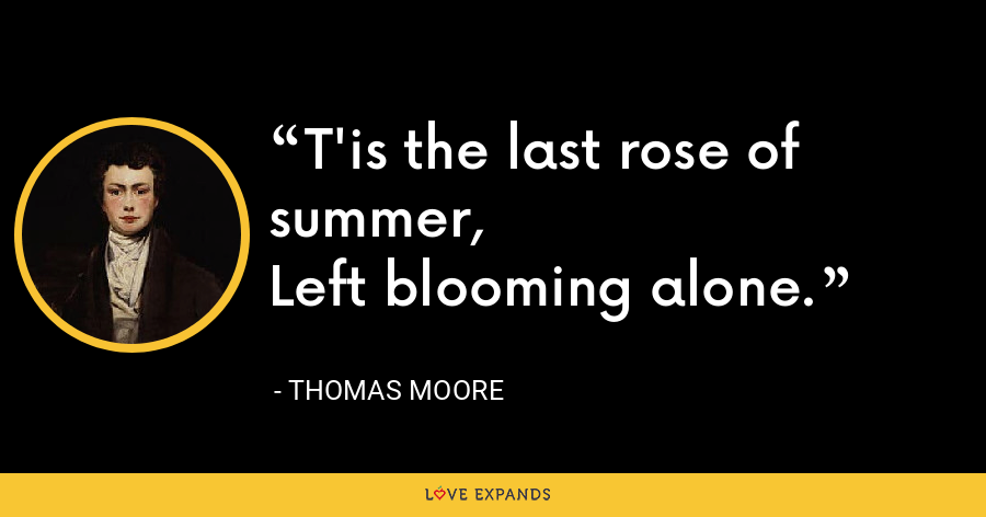 T'is the last rose of summer, Left blooming alone. - Thomas Moore
