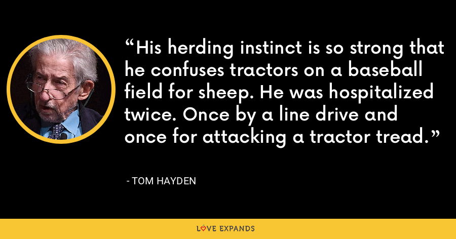 His herding instinct is so strong that he confuses tractors on a baseball field for sheep. He was hospitalized twice. Once by a line drive and once for attacking a tractor tread. - Tom Hayden