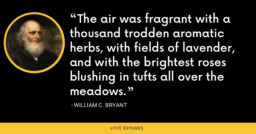 The air was fragrant with a thousand trodden aromatic herbs, with fields of lavender, and with the brightest roses blushing in tufts all over the meadows. - William C. Bryant