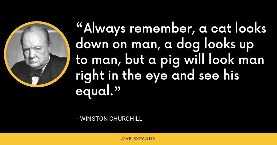 Always remember, a cat looks down on man, a dog looks up to man, but a pig will look man right in the eye and see his equal. - Winston Churchill